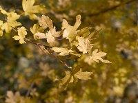 hojas 1